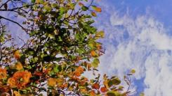 Herbstfarben Herbsthimmel