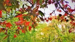 Herbst - Blätter in Baden-Baden