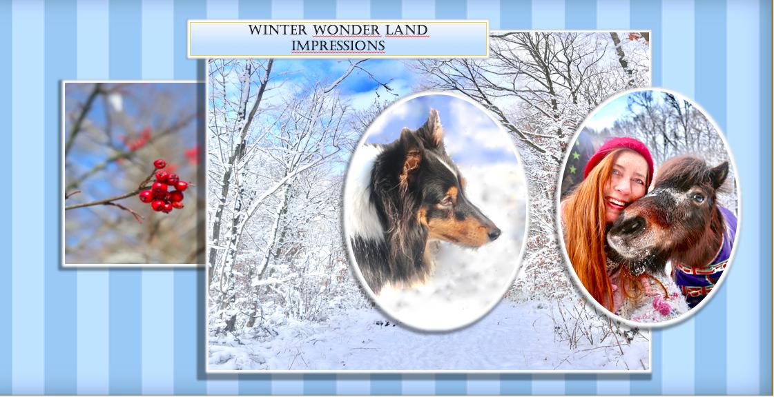 Gute-Laune-Bilder: Wintersonne, Glitzerlandschaft, Hunde, Pferde und der erwachende Frühling …